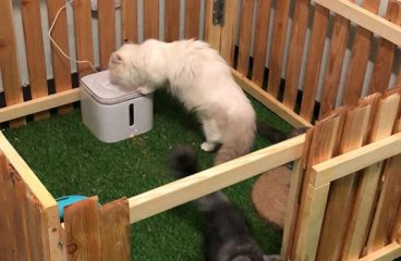 Petkit Eversweet Pet Water Fountain Provides Fresh, Filtered Water For Your Munchkin Cat