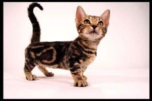 A genetta kitten looking up